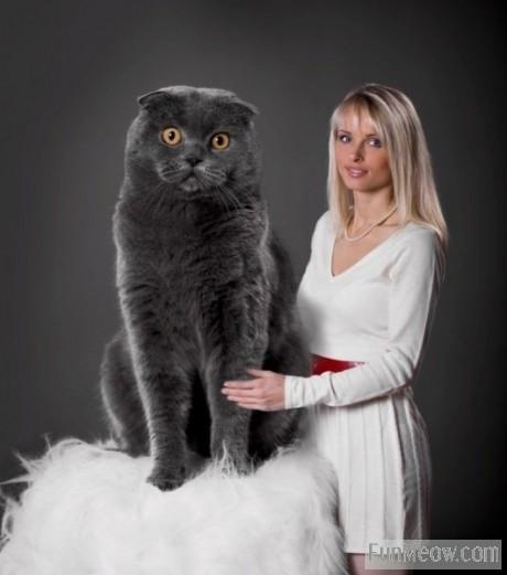 Huge Cat!!
